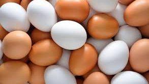 قیمت تولید انواع تخم شترمرغ