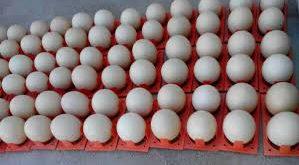 بازار تخم شترمرغ