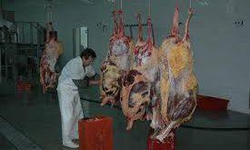 بازار گوشت شترمرغ