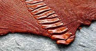 پوست پای شترمرغ صادراتی